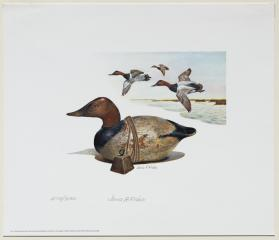 1975-76 Federal Duck Stamp Print; Canvasback Decoy