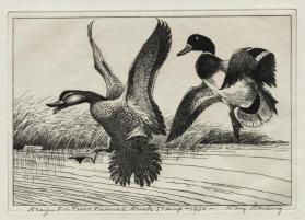 1934-35 Federal Duck Stamp Print; Mallards